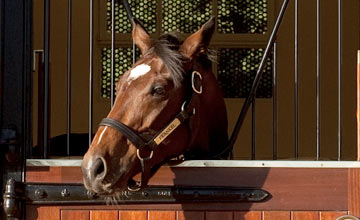 Frankel in his box