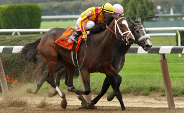 Dreaming of Julia (A.P. Indy) and jockey John Velazquez win the Frizette Stakes (Gr I) at Belmont Park 10/6/12. Trainer: Todd Pletcher. Owner: Stonestreet Stables