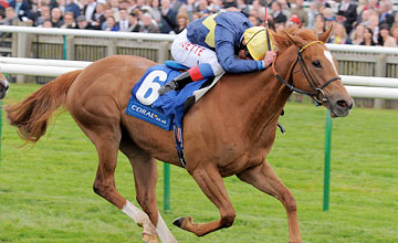 Mince, Newmarket 19.5.12.