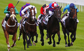 Left to right: Massiyn - Aiken - Royal Diamond - Brown Panther - Irish St Leger - Curragh 2012