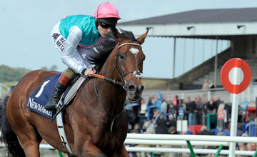 FRANKEL with T Queally gallops at Newmarket 29-9-12. Copyright Martin Lynch.