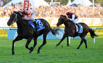 Black Caviar - Randwick - 13/04/2013