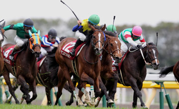 Denim And Ruby (Katsuhiko Sumii / Hiroyuki Uchida) wins Flora Stakes at Tokyo