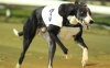 EDEN STAR saunters to an easy win in his comeback race landing the odds of 14 by just over seven lengthsBelle Vue 13th November 2012Pic Steve Nash