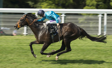 Brown Panther: impressive winner of last month's Goodwood Cup