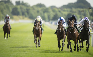 Toronado (left): ace miler was well beaten in Wednesday's Juddmonte International
