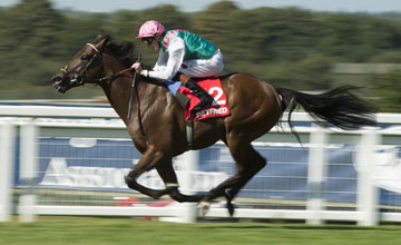 Kingman (James Doyle) wins the Solario stakes Sandown 31.8.13