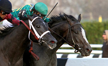 Honor Code (right) Remsen Stakes