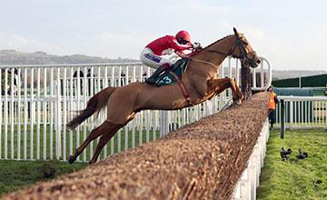DOUBLE ROSS Ridden by Sam Twiston-Davies wins at Cheltenham 14/12/13