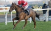 Silviniaco Conti bids for second Charlie Hall victory