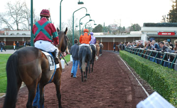 Cagnes Sur Mer racecourse Paddock