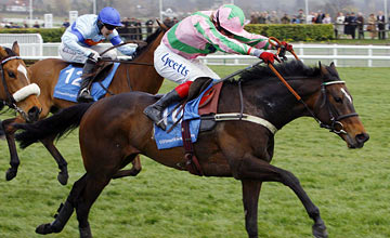 Katchit - Champion Hurdle - 2008