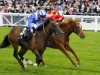 Elzaam son of Redoute's Choice will stand at Ballyhane Stud