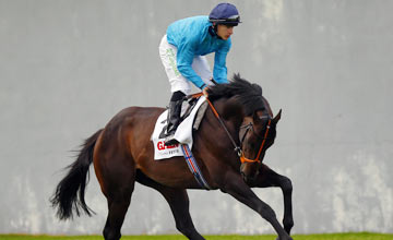 Brown Panther 15.09.12