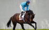 Breeders' Cup Turf being considered for Brown Panther