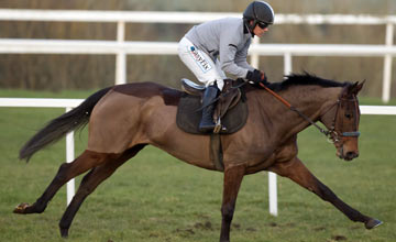 Quevega Leopardstown gallops