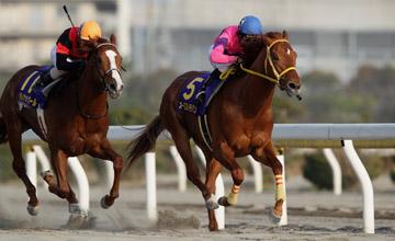 Osumi Ichiban wins the Diolite Kinen - Funabashii 13.03.13