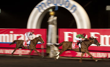 Animal Kingdom - Dubai World Cup 30.03.2013