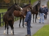 CoolmoreFethardCoTipperaryIreland 24107PictureEdward WhitakerSadler's Wells leads his sons GalileoMontjeu and High Chaparral for a walk
