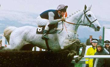 Desert Orchid - 1989 Gold Cup