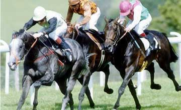 Further Flight - Goodwood Cup 1991