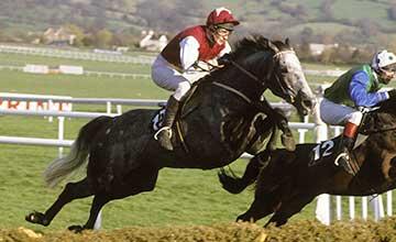 Kribensis - Champion Hurdle 1990