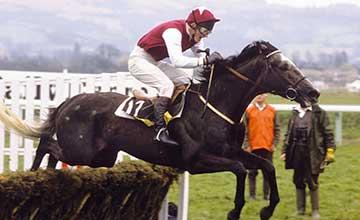 Kribensis - Triumph Hurdle 1988