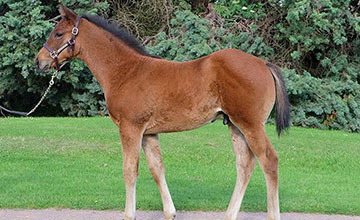 Frankel's first foal