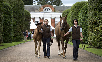 he world's first Frankel foal to be offered at public auction