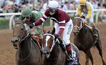 Usa Untapable Bids To Blossom Again Horse Racing News