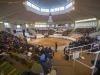 A view of the Tattersalls sale ring