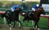 Street Cry left and Express Tour battle out the finish of the UAE Derby