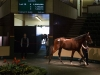1.1m Stars filly on top as Orby figures grow