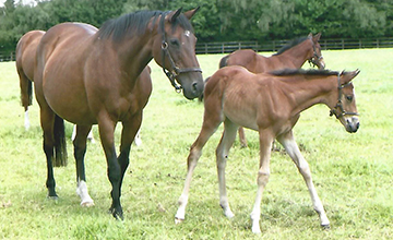 Nuryana and her foal called fleche d'or, who later became dam of golden horn