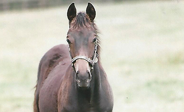 Golden Horn as a foal