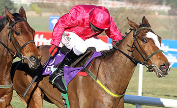Apache Stronghold: last seen at the Punchestown Festival in April