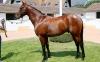 Zoffany colt tops day one at Arqana sale