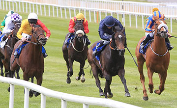 Derby hopes for Giovanni Canaletto (right) come unstuck yesterday as he is beaten by Curvy (dark blue) in the Gallinule Stakes