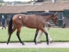 Top lot this Dubawi was bought by MV Magnier for 2100000gns