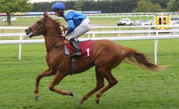 Image result for Horse Seve