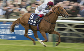 Latest Racing News: 'Stronger' Galileo Gold on right track for Sussex Stakes
