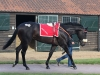 The son of Le Havre who was bought by Blandford Bloodstock