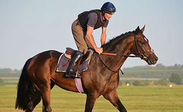 The exciting Swiss Storm, trained by David Elsworth