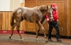 The Monsieur Bond filly who headed trade at Doncaster