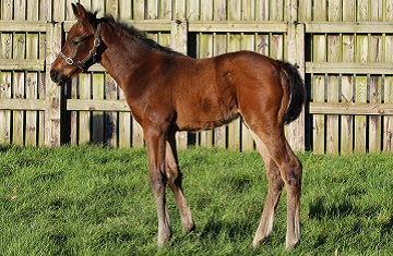 No-nay-never-foal-ex-chaibia--3----small