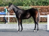 Camelot filly sold for €80000 at Goffs on Wednesday