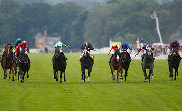Twilight Son (second left) wins from Gold-Fun (fourth right) in a frantic finish