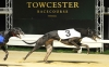 Towcestergreyhound