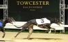 Towcestergreyhound