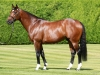 Frankel at Banstead Manor Stud Free to use with credit Asunción Piñeyrúa